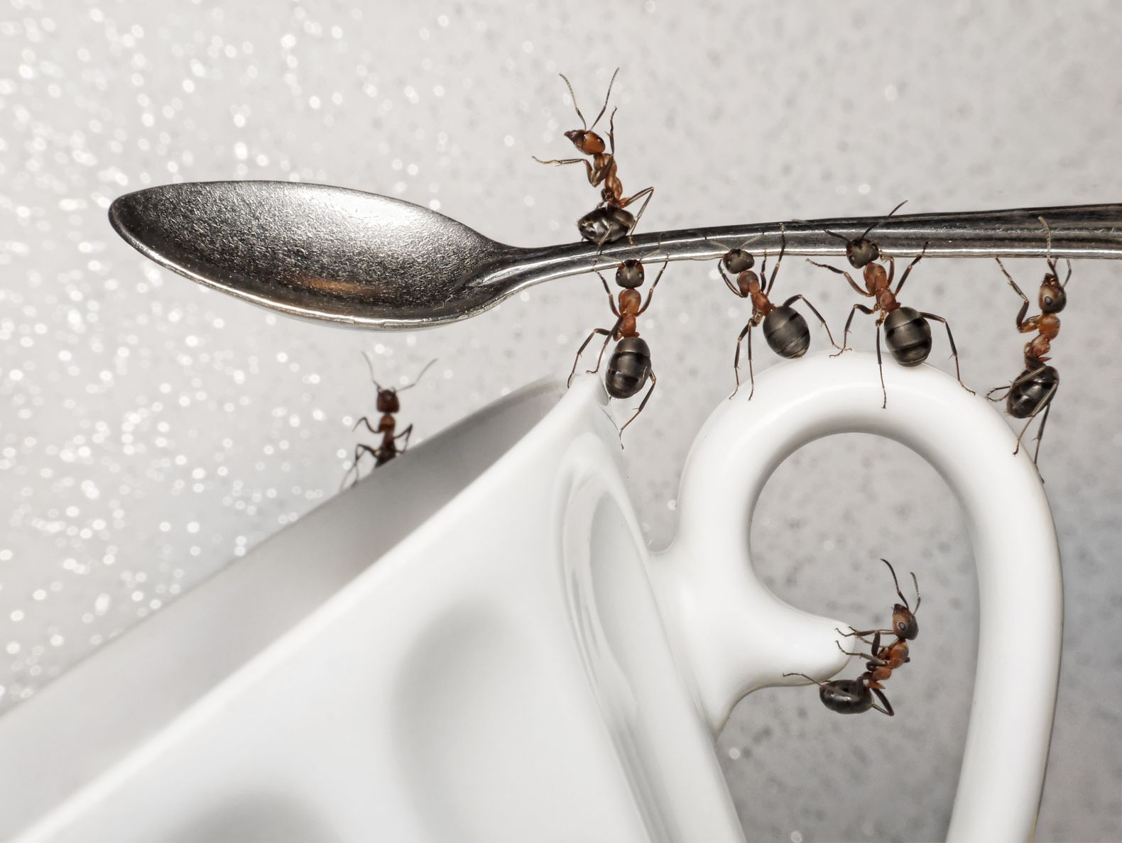 12fb7a732fa6c0aaa5e95e902be6ddee - How To Get Rid Of Ants In The Apartment
