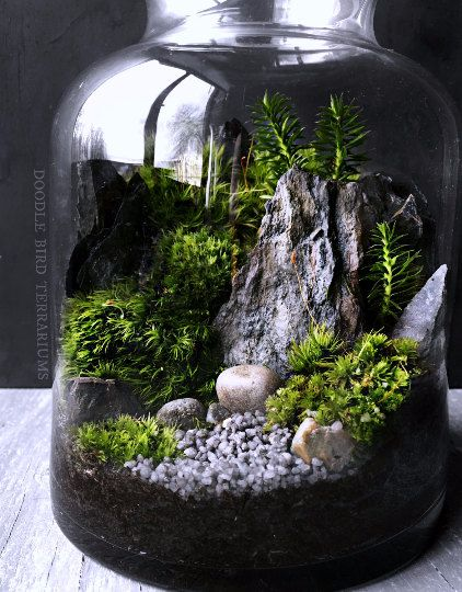 Waterfall Terrarium With Live Moss Plants In Hex Glass Jar