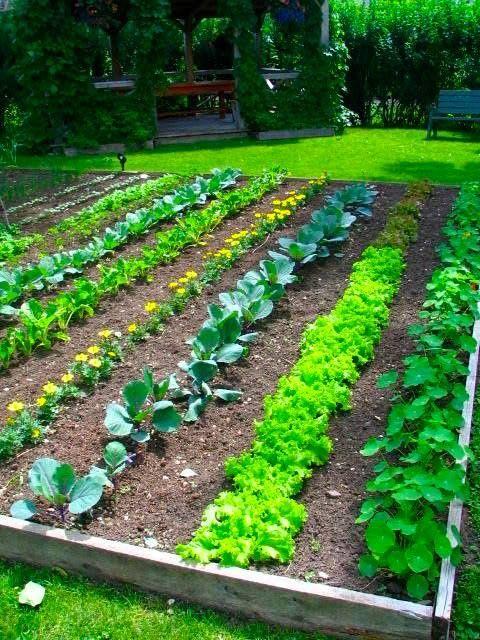 How to layout a Backyard Vegetable Garden! Hortaliza Pinterest