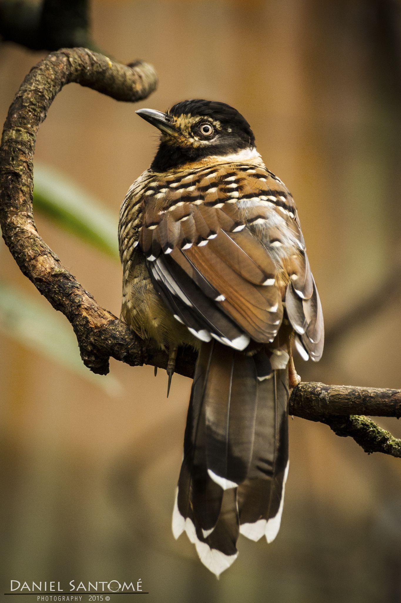 """""""Tropical Watchtower"""", fotografía de una ave en la zona de la estufa tropical del Zoo de Santo Inácio, Portugal."""