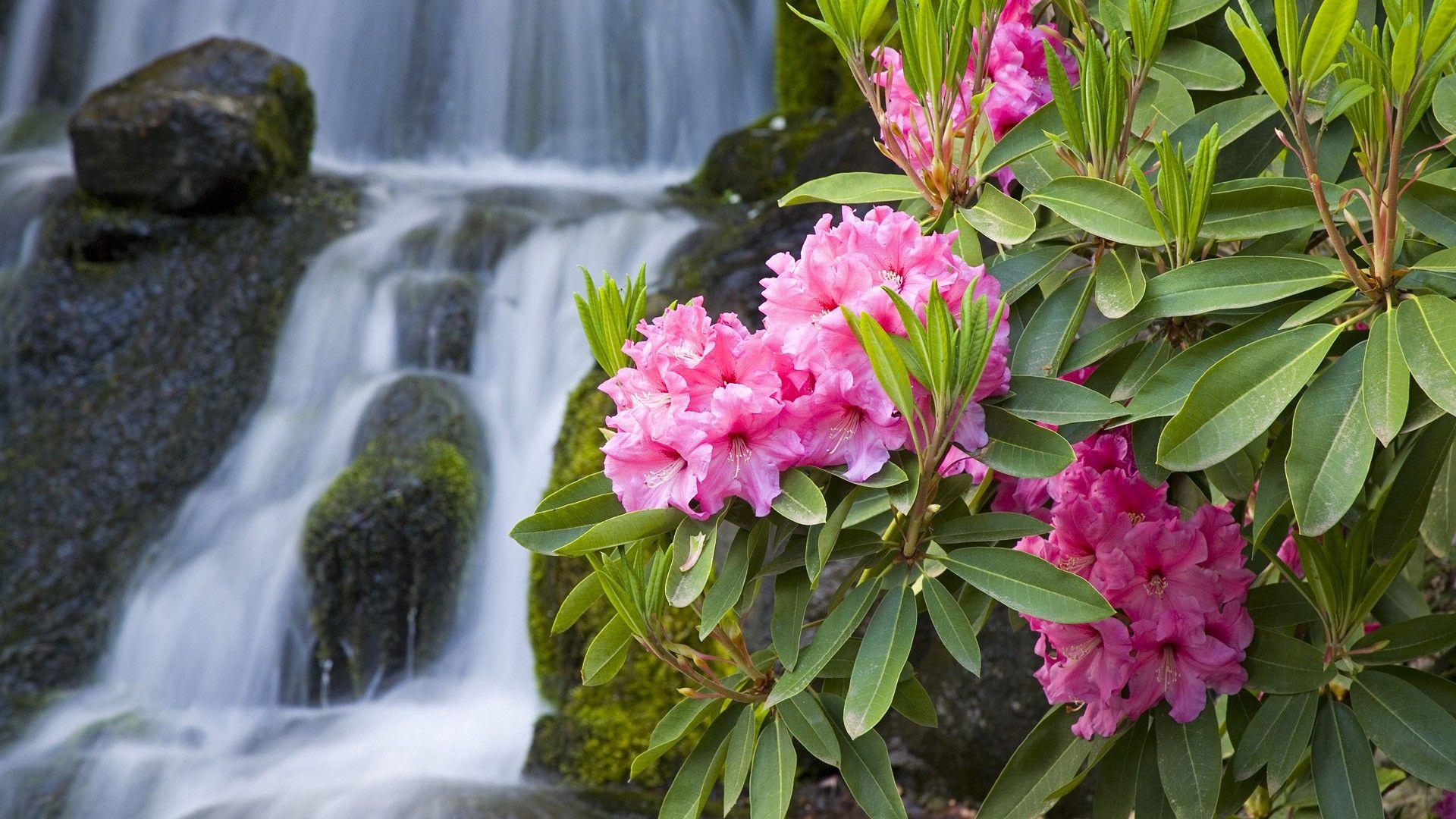 Flower Wallpaper Bing Images Spring Wallpaper Spring Wallpaper Hd Waterfall Wallpaper