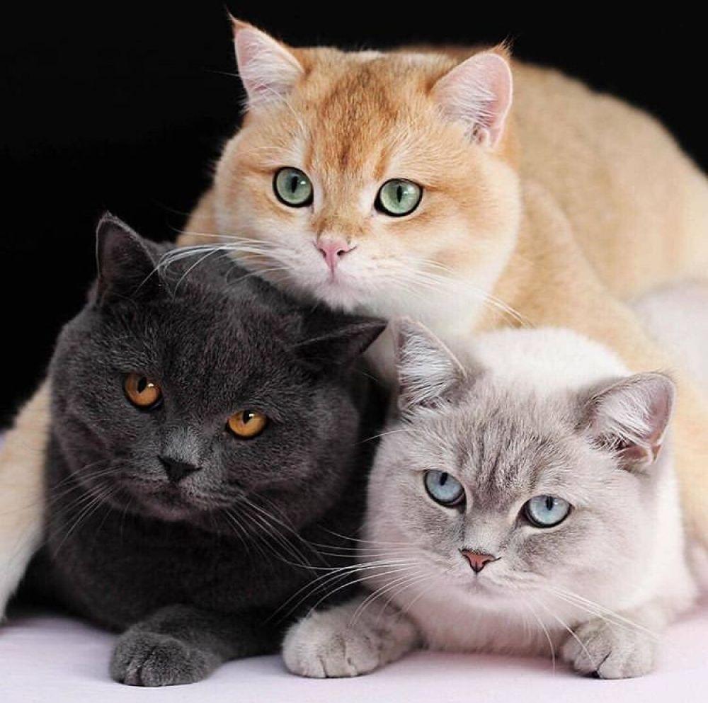 Online Store Beautiful Cats Cute Cats Beautiful Cat Breeds