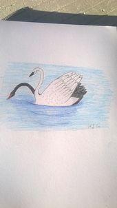 Faites un défi de dessin de 30 jours. Jour 1) Un animal que vous n'avez jamais dessiné auparavant. J'ai dessiné des cygnes :) - #animal ... ... - #animal #avant #chall ...