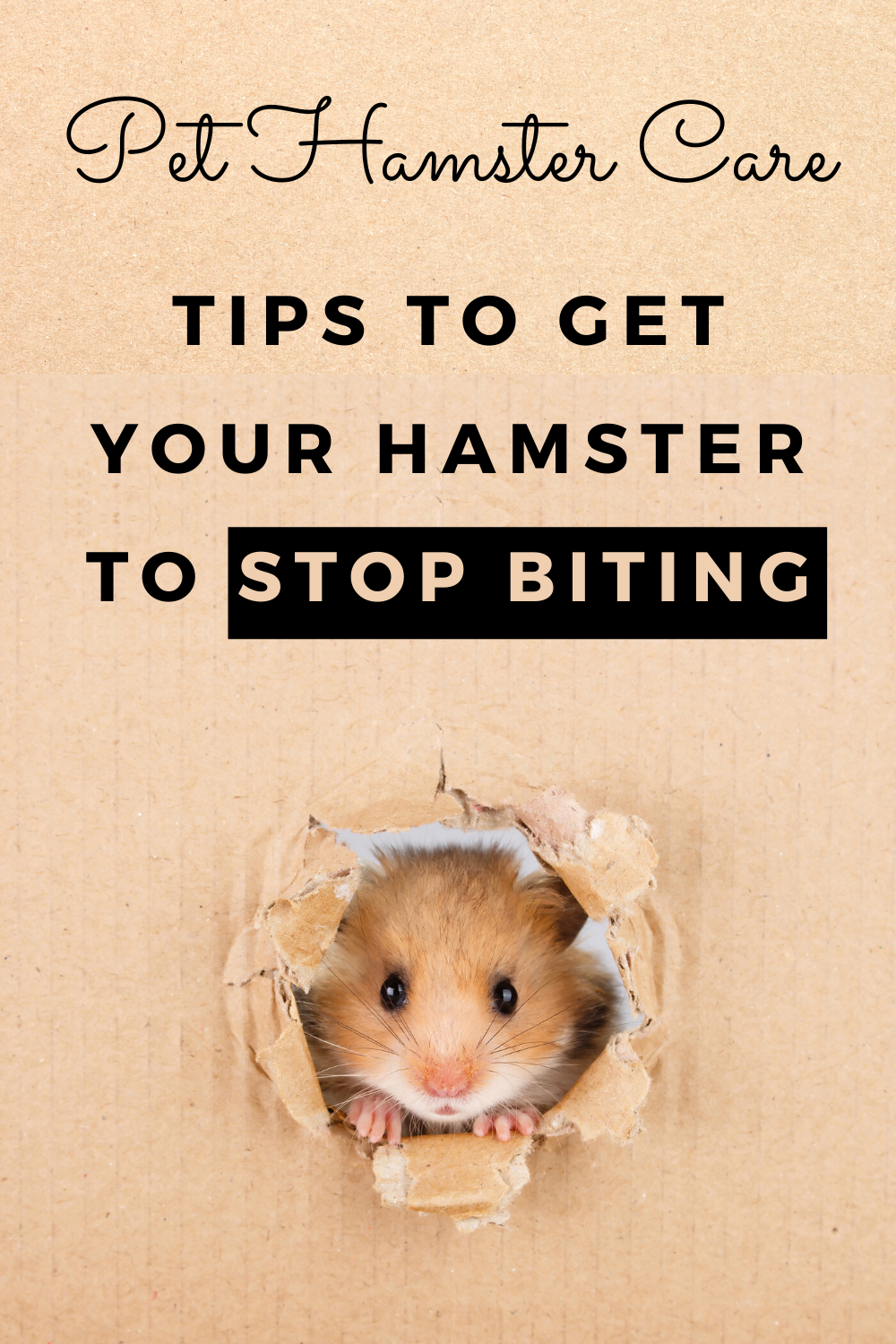 12fc68dd762dd1791f7c45e1cd892108 - How To Get My Hamster To Stop Biting His Cage