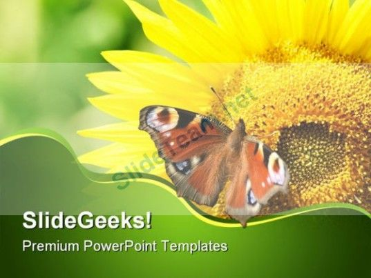 Sunflower With Butterfly Nature PowerPoint Templates And - nature powerpoint template