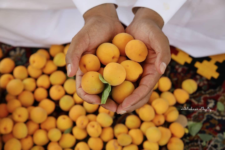 تصويري المشمش الطائفي Prunus Armeniaca L Taif تنتمي فاكهة المشمش إلى الفصيلة الوردية وهي ت زر ع في مناطق متعددة من العالم ومنها In 2020 Food Breakfast Eggs