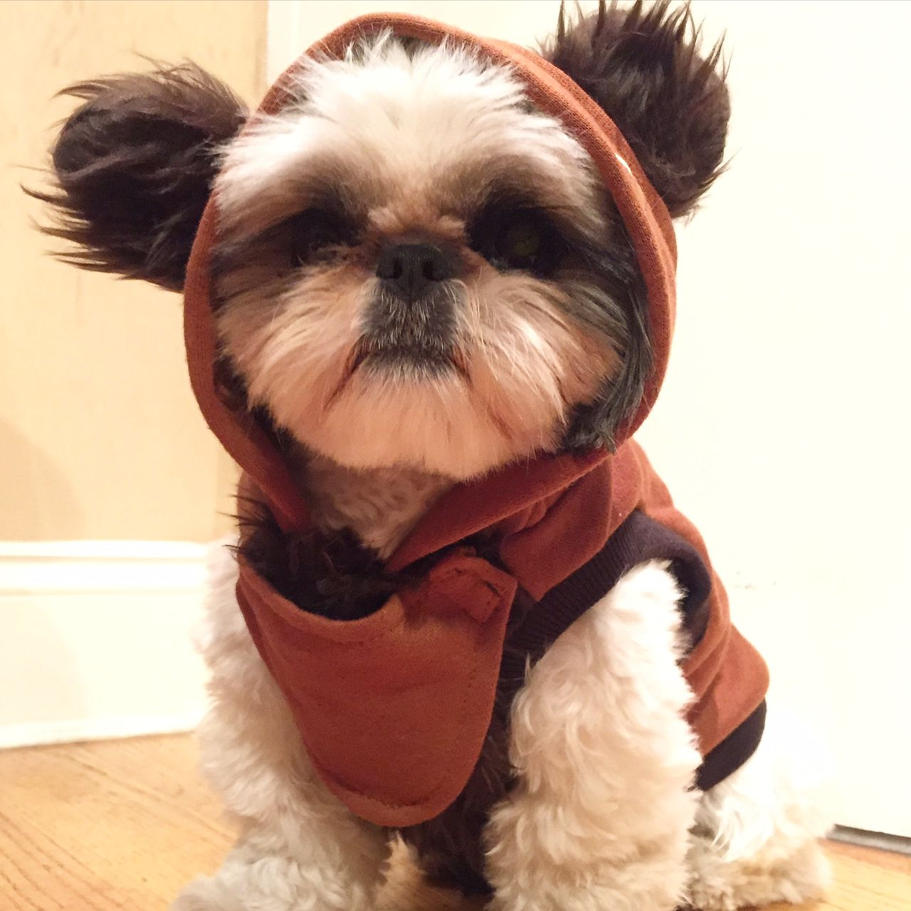 ewok dog costume shih tzu image result for dog ewok costume star wars pinterest 7489