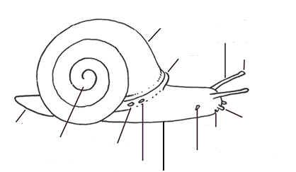 water snail diagram water database wiring diagram images 12feb9056304689a6719c01c2d2b680c