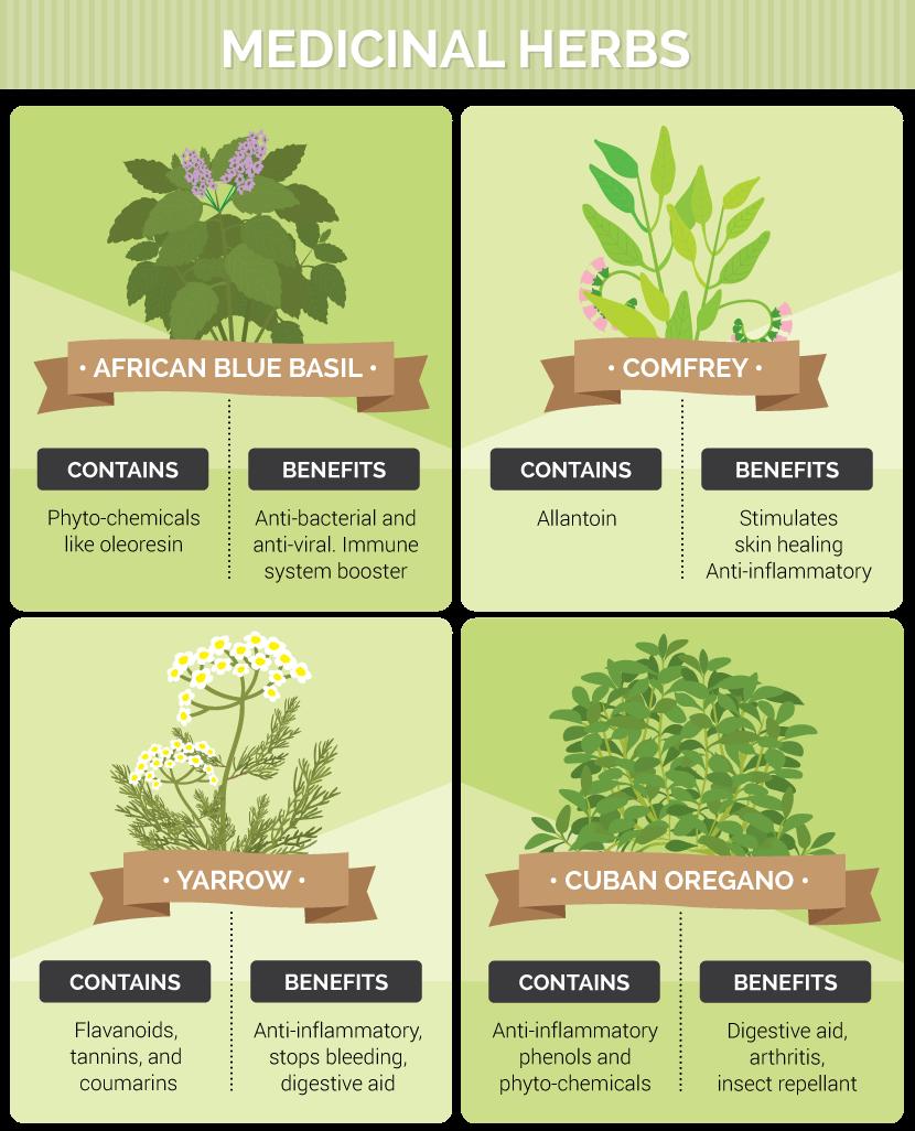 How To Grow Totally Legal Medicinal Herbs At Home Medicinal