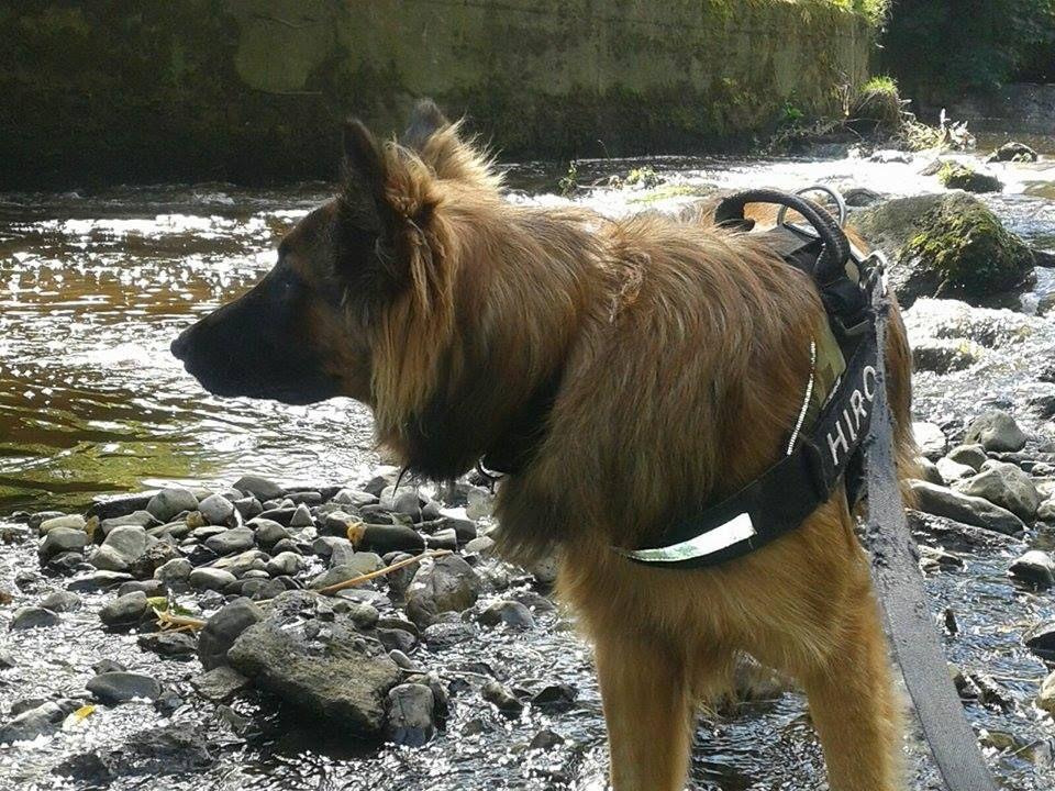 Hiro Mix Pawshake Dog Friends Moving To Ireland New Environment
