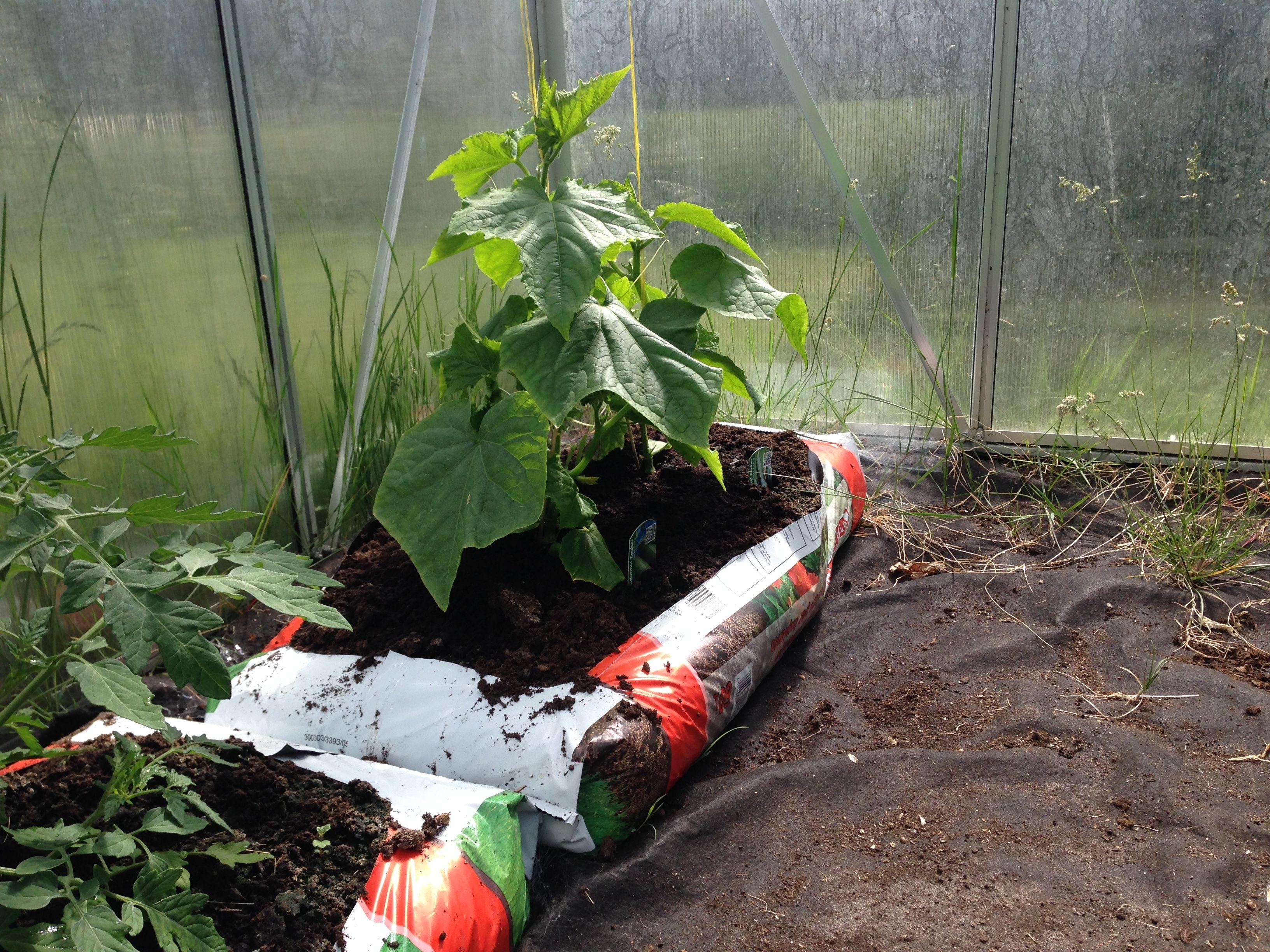 45+ Tomaten im gewaechshaus pflanzen 2021 ideen