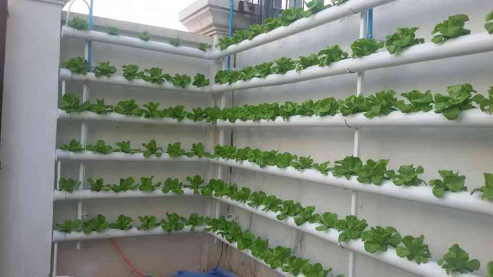 Aquaponics System Small Backyard Aquaponics Hydroponic