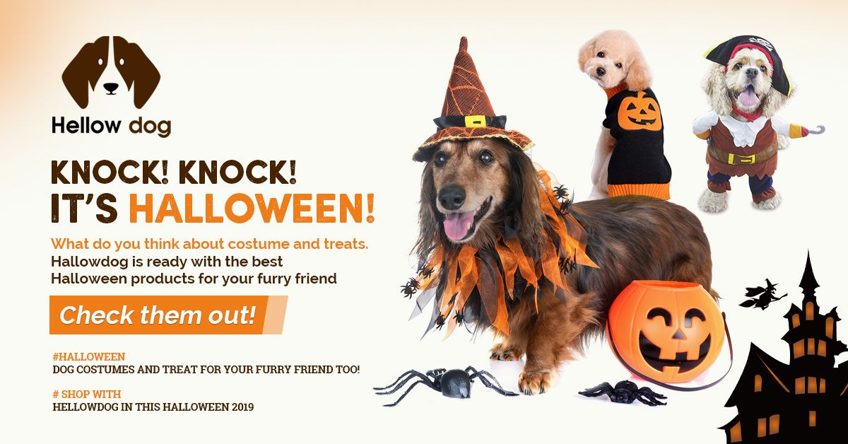 Best Halloween Dog Costume Ideas 2019 Dog Halloween Costumes