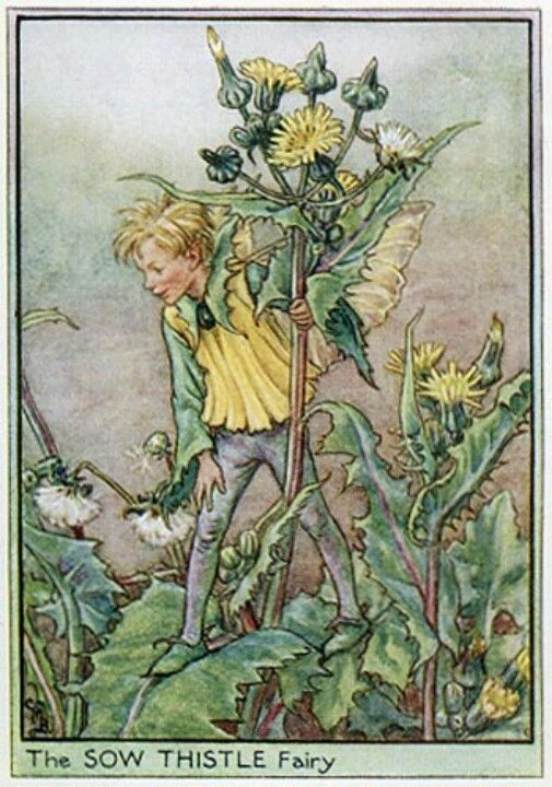 Fairy: The Sow Thistle Fairy, by (CMB) Cicely Mary Barker, 1940