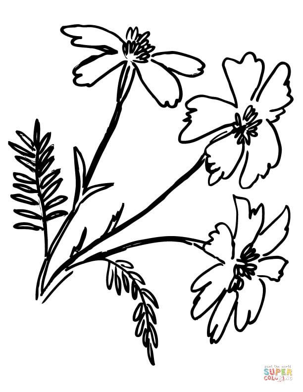 Tagetes Marigolds Coloring Page Free Printable Coloring Pages