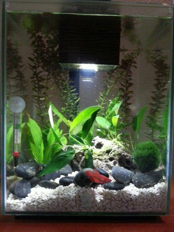 Betta than a bowl betta fish aquariums betta tank for Fluval chi fish tank