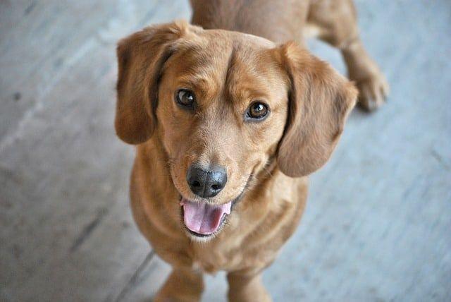 Entwurmung Beim Hund Wurmkur Hausmittel Gegen Wurmer Bei Hunden