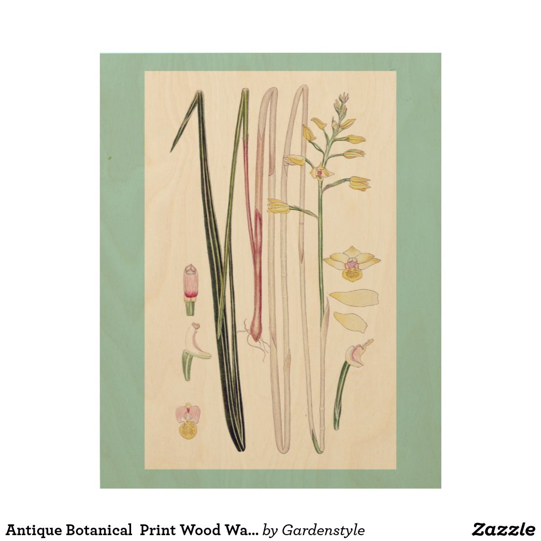 Antique botanical print wood wall art botanical and floral office