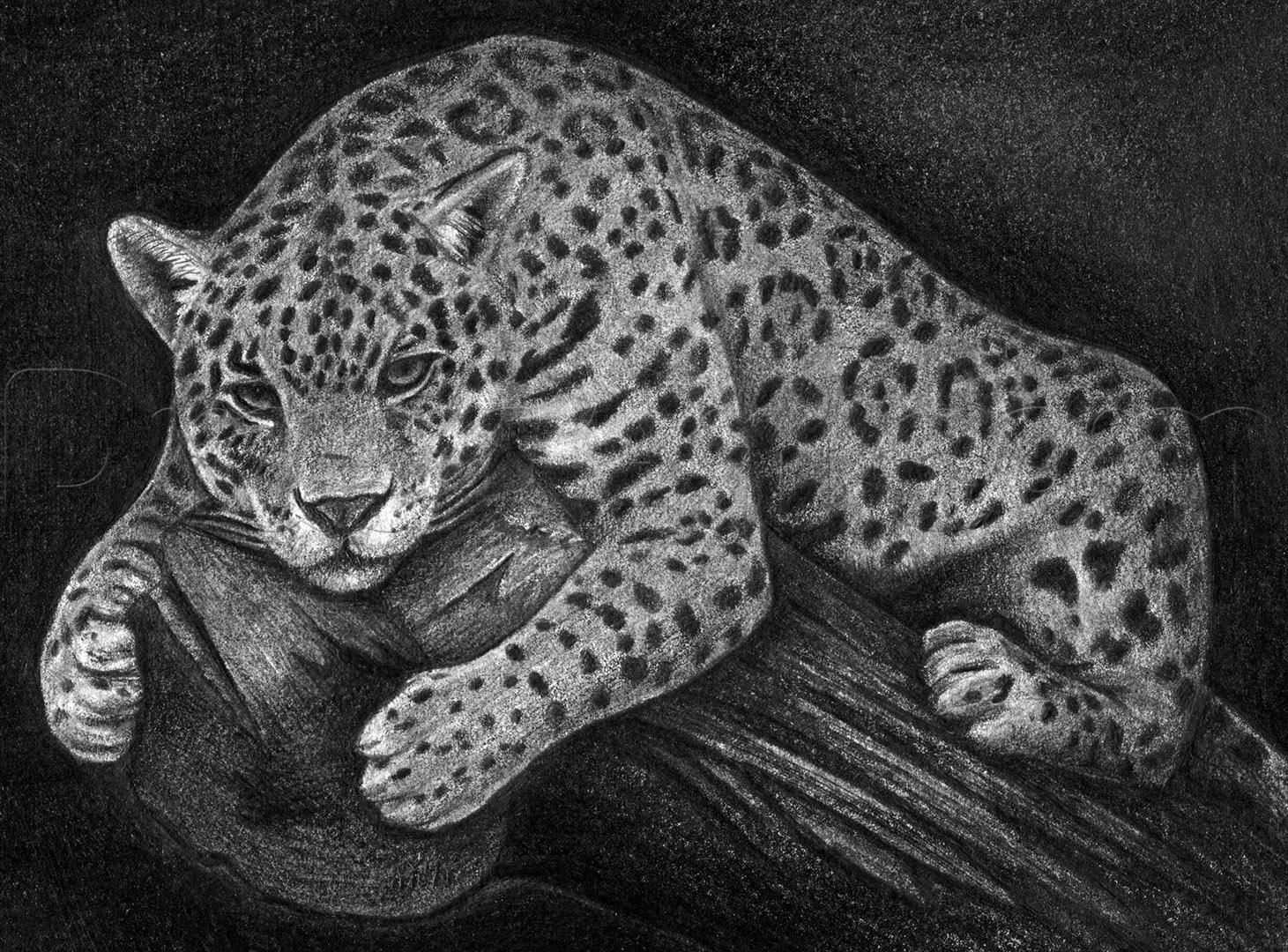 how to draw a realistic jaguar
