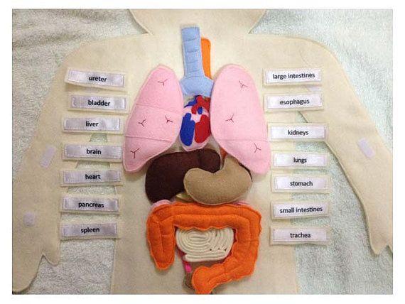 Human Anatomy   Pinterest   Anatomía humana, Anatomía y La caja torácica