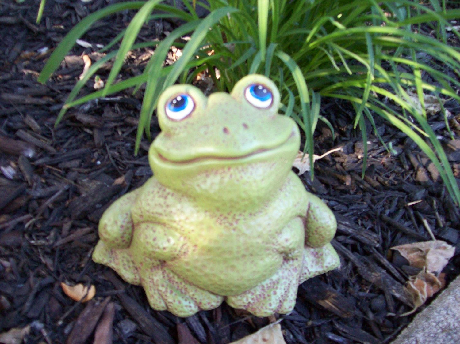 decor decoration frog blue eyes plant outdoor frog yellow small
