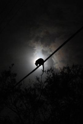 Brisbane Australia - Possum by hugologan on 500px
