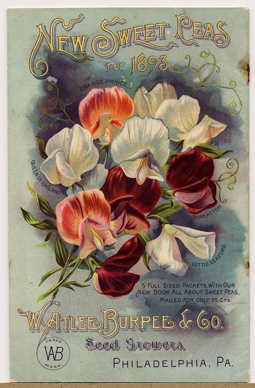 New Sweet Peas for 1893 ~ W. Atlee Burpee & Co. catalogue