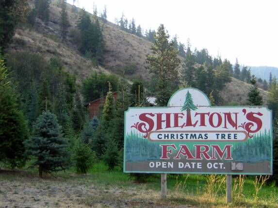 Shelton S Tree Farm Cashmere Wa Tree Farms Christmas Tree Farm Farm