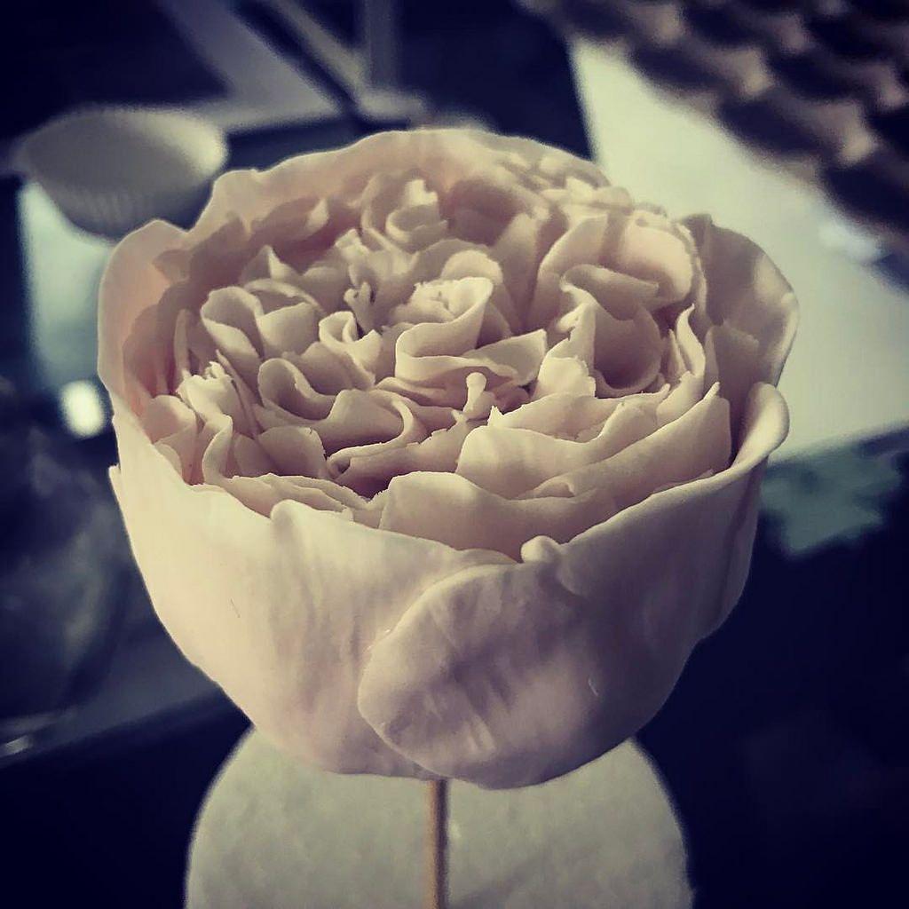 Sugar flowers today my favourite... peonies! #peonies #sugar #sugarflowers #blush #blushpink #blushpinkwedding #planitcake