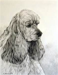 Coloriage Chien Springer.Cocker Spaniel Art Bing Images Cockers And Springers Animaux A