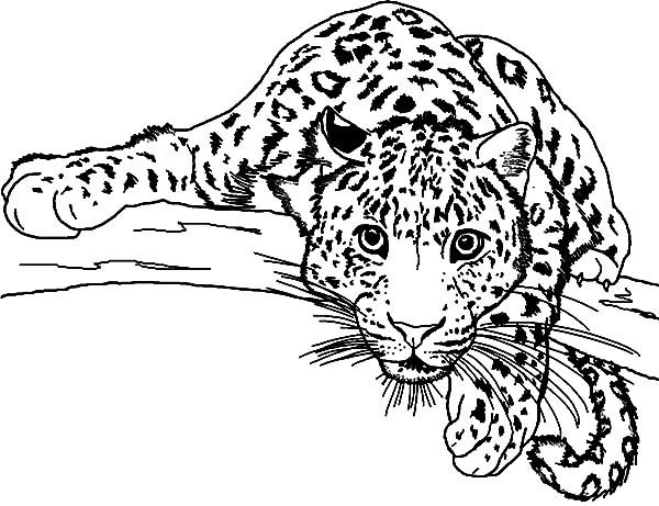 Coloriage leopard image de animaux id 16 colorier - Animal a colorier ...