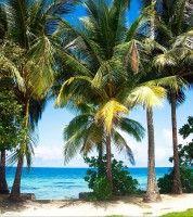 Tapete Palmen fototapete tapete palmen insel strand meer foto 180 x 202 cm
