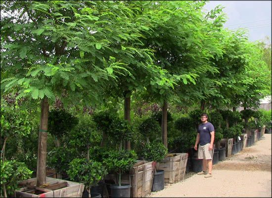 What types of products does Moon Valley Nurseries offer?