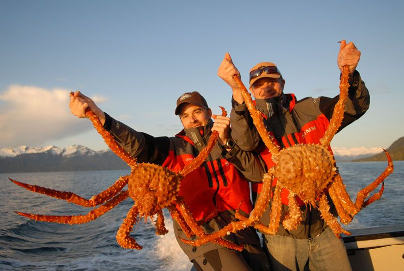 Ruben's Grocery - Our giant Alaskan King Crab just flew...  Giant Alaskan King Crab Legs