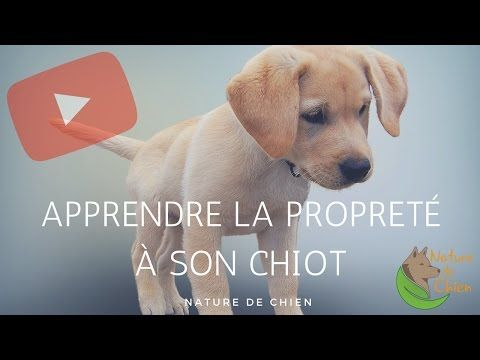 apprendre au chiot tre propre royal canin youtube chiens. Black Bedroom Furniture Sets. Home Design Ideas