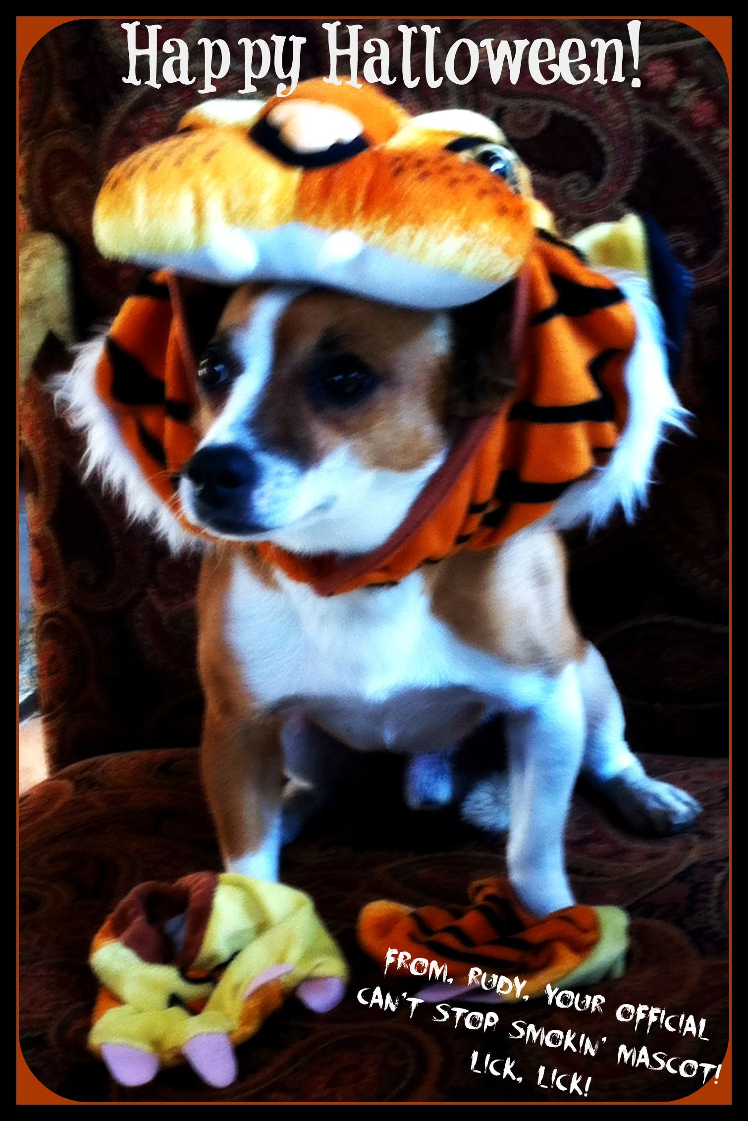 Happy Halloween!  From our mascot, Rudy!