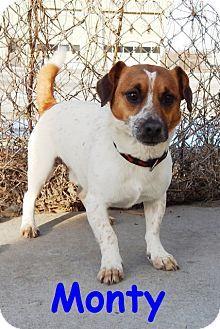 Erie Pa Jack Russell Terrier Mix Meet Monty A Dog For Adoption Dog Adoption Jack Russell Terrier Pet Adoption