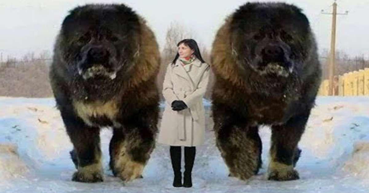Biggest Dog Breed Ever