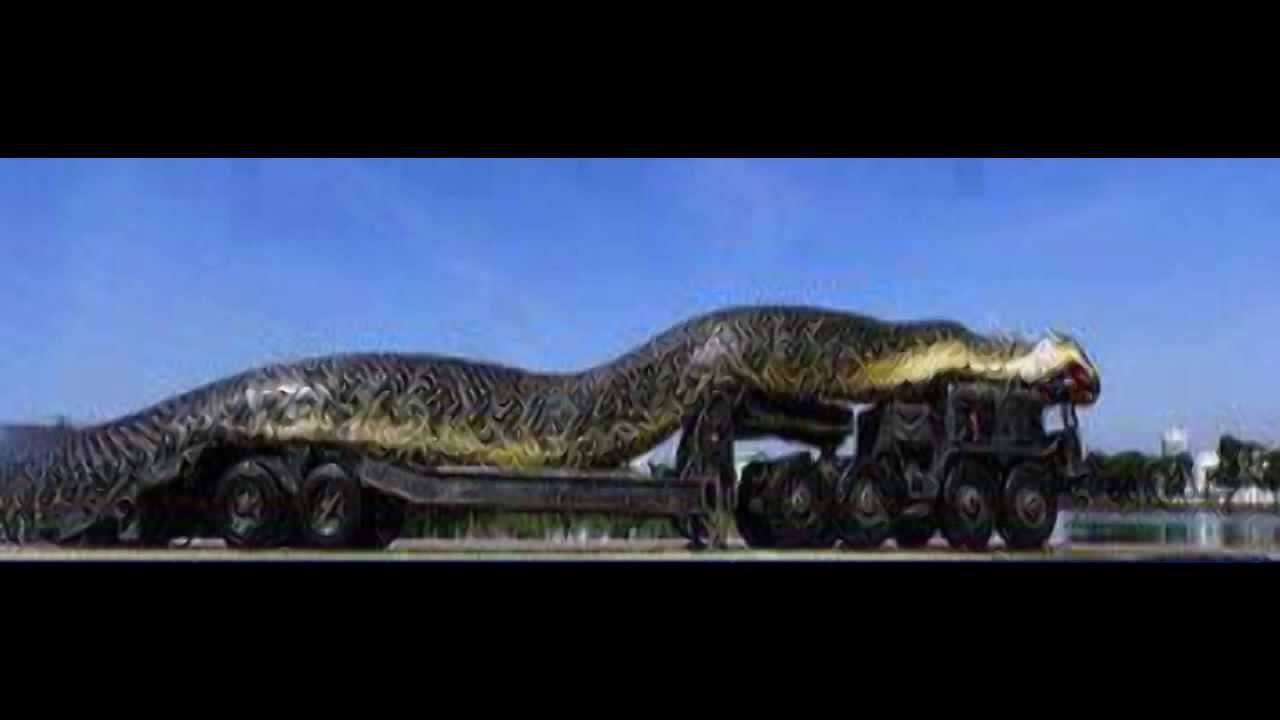 Researchers have found fossils of the biggest known snake ...