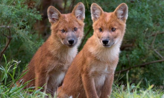 25 Spectacular Animals That Start With The Letter D Animals Wild Dogs Animals Beautiful