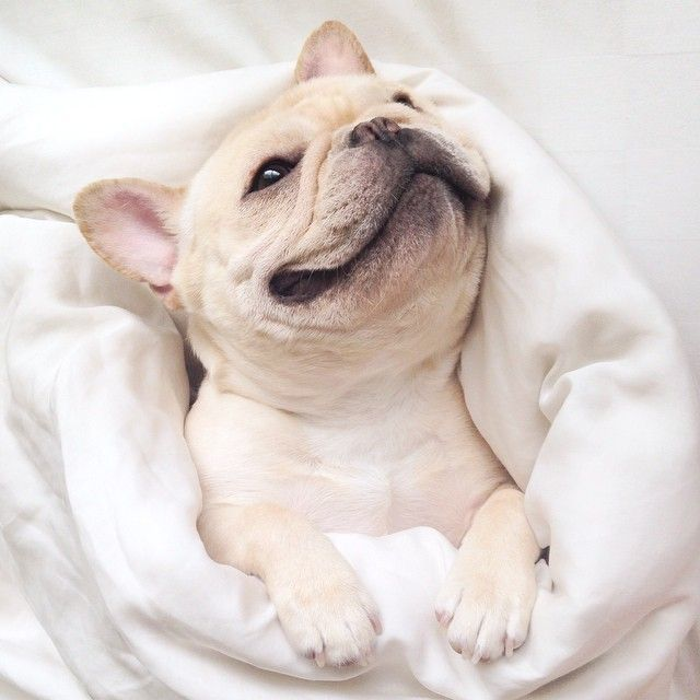 29 Adorable Animals That Will Leave You Smiling For The Rest Of The Day Cute Animals Animals Puppies