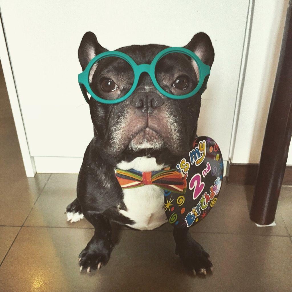 Dailo French Bulldog Pawshake Dog Boarding Puppies Weird Animals