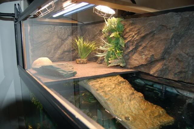 Basking area idea for aquatic turtles pets pinterest for Fish tank turtles