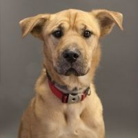 This Dog Is Ready To Be Adopted From Maxfund Denver S No Kill Animal Shelter No Kill Animal Shelter Animal Shelter Animals