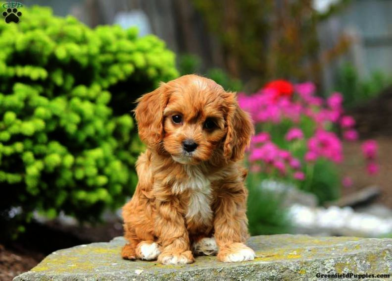 Pin On Cute Dogs And Puppies