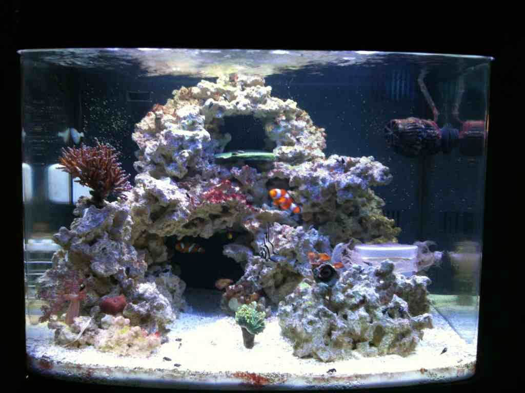 This is exactly how i want my rocks saltwater for Bio cube fish tank