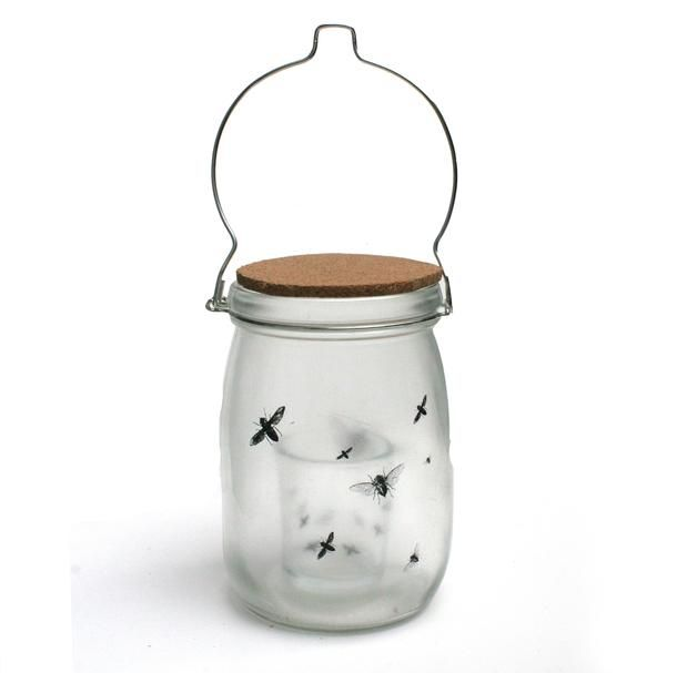 Shadow Night Jar. insects - Love Milo