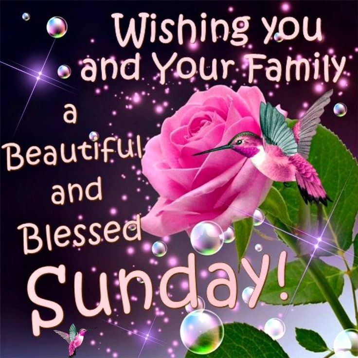 happy sunday enjoy your day