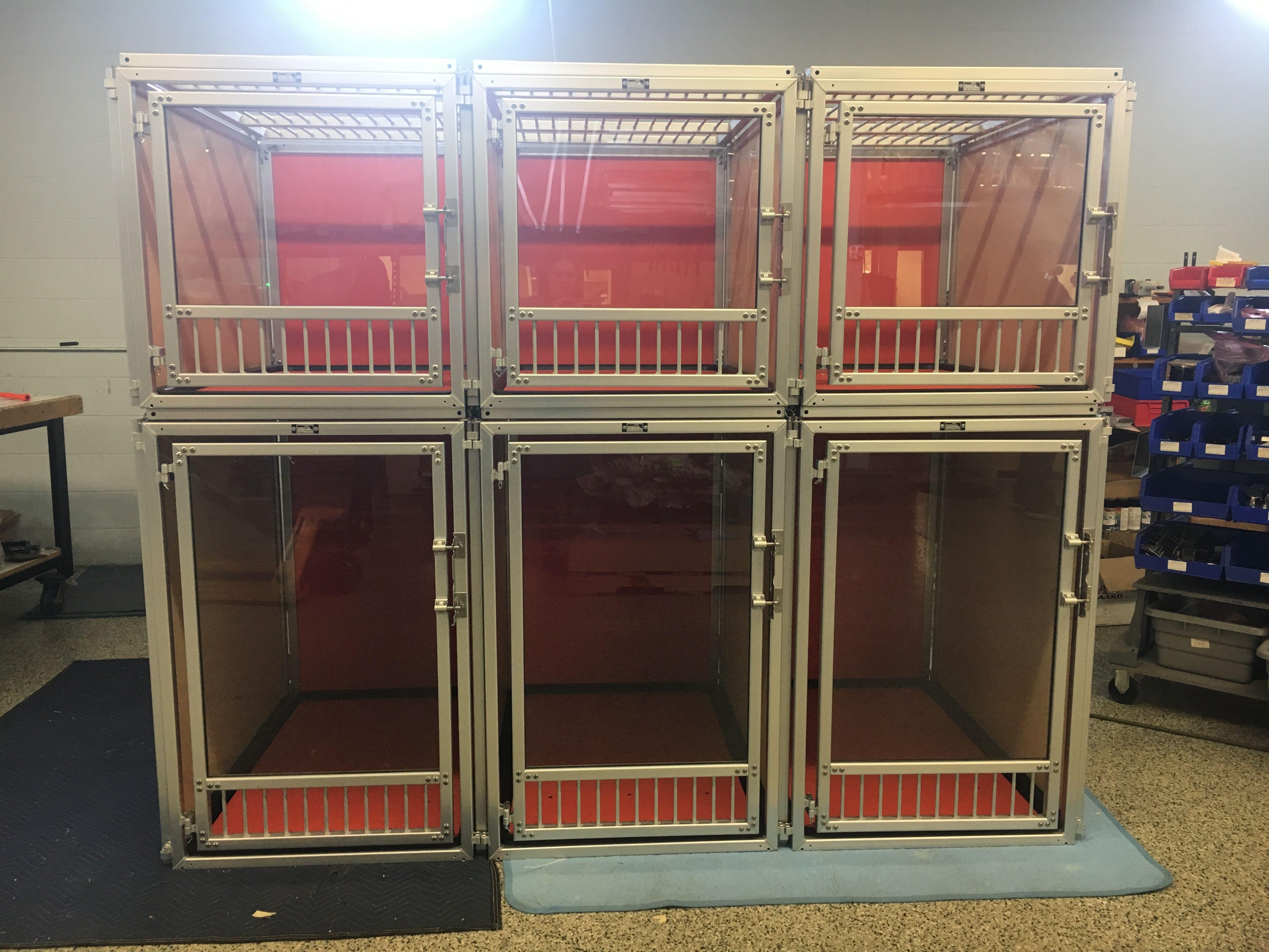 Express Suites w/ Glass Gates Dog boarding kennels, Dog