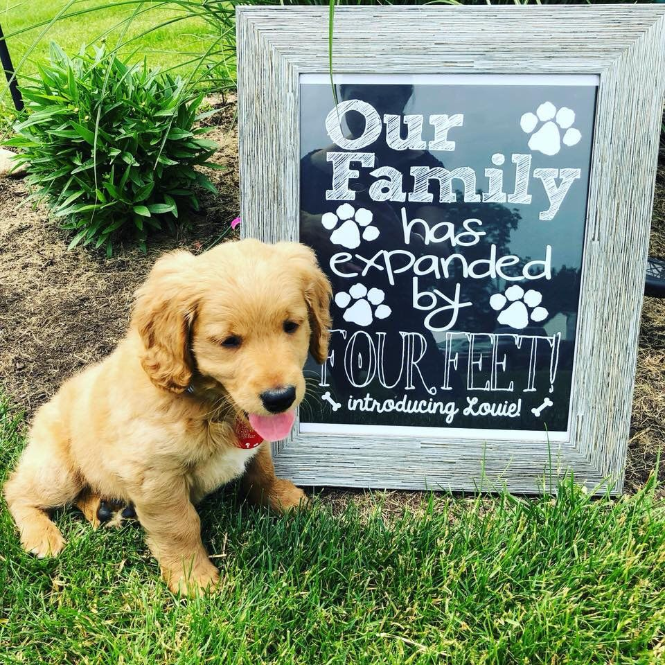 New Puppy Announcement Personalized Our Family Has Expanded By